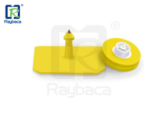 Yellow Color RFID Livestock Tags EID Swine / Pig Female Tags Square Shape OEM ODM